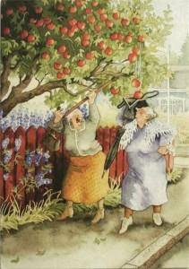 Сбор яблок.