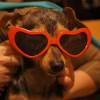 Солнечные очки для собак.