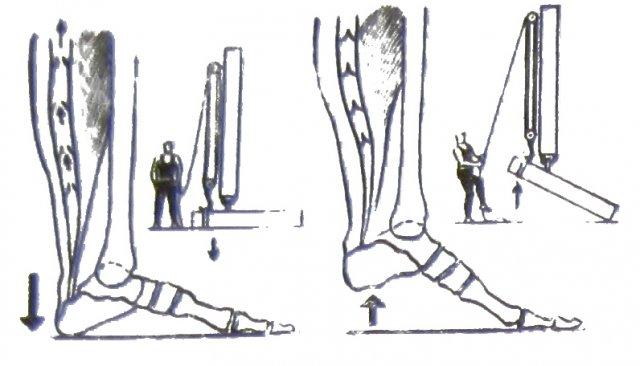 Виброгимнастика Микулина