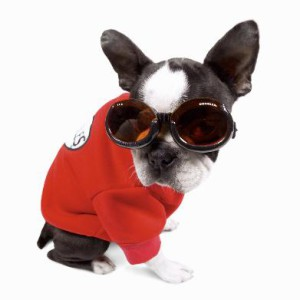 Очки для собак.